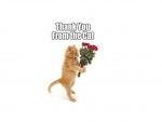 Thank you from the cat!