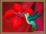 HUMMINGBIRD WITH RED FLOWER