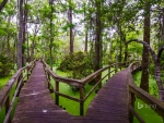 Wooden walkway in the Whooping Crane Pond Conservancy on Hilton Head Island South Carolina