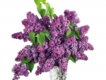 vase of purple lilacs