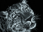 'Beautiful leopard'.....