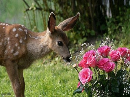 how to keep deer from eating my flowers