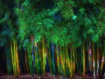 multicolored bamboo forest