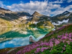 flowers around a mountainside lake