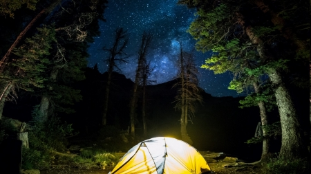 camping under the stars - light, tent, night, stars, trees