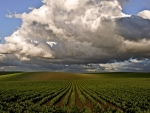 clouds over fields of vegetable rows