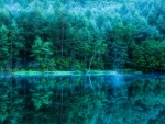 spectacular forest reflected in lake hdr