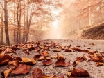 autumn leaves on a forest road