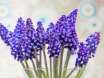 Purple flowers /Muscari