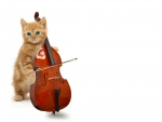 KittyCello