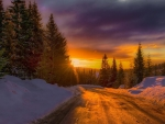 sunrise over a winter forest road in norway