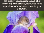 'Little mouse sleeping in a flower'.....