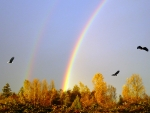 Autumn Double Rainbow