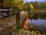 wooden walkway along a lake