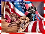 American Puppies F