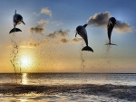 Dolphins Leaping in the Sunset F