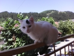 My cat on the balcony