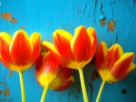 Tulips against Blue Wall