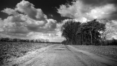 clouds over a country road in monochrome - field, clouds, road, tree, monochrome, sky