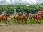 horse race hdr