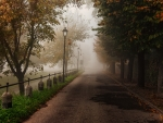 tree lined misty street in autumn