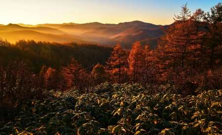 The Rays of the Sun - sunrise, autumn, forest, mountain, trees
