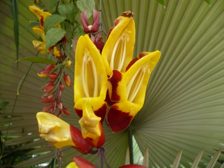 orchid - red, orchid, yellow flower, flower, orchidea, plant, beautiful, palm, leaf
