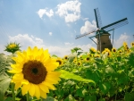 Sunflower /Windmill