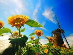 Mill in sunflowers field