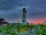 wildflowers around a lighthouse at sunset hdr