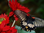 BEAUTIFUL BUTTERFLY ON FLOWERS