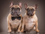 Bulldogs couple