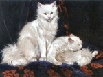 Two White Persians