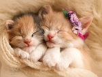 Lovely Kittens