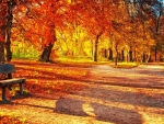 vibrant colors of autumn leaves in a park hdr