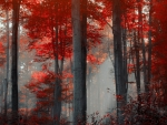 Red Forest Landscape