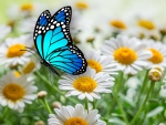 Daisies Butterfly