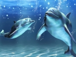Dolphins Smile