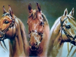 Three Musketeers - Horses f