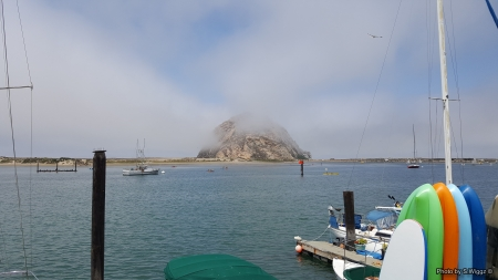 free online personals in morro bay Morro bay man buys 70-pound octopus to set it free share shares  really it  just came down to a personal decision for gio he's an avid.