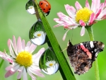 Flowers,Butterfly and Ladybug