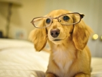 Puppy with glasses