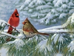 Winter Cardinals in the Snow F