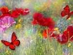 Poppy Field Butterflies