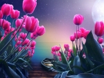 Pink Tulips in The Moonshine