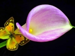 Calla Lily with Butterfly