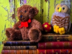 ฺBear & Owl on Books