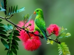 Green Parrot on the Branch