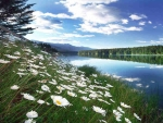 natural,lake,flower,sky,