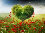 Heart tree and poppies